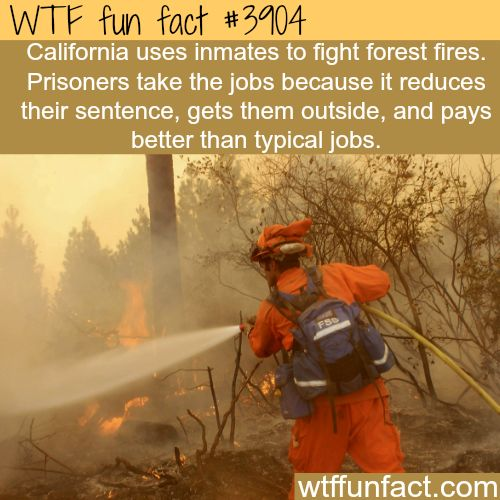 California pay inmates to fight forest fires - Did NOT Know This!  WTF! fun facts