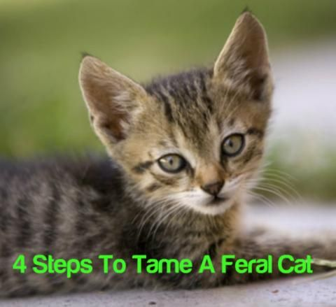 4 Steps To Tame A Feral Cat...see more at PetsLady.com -The FUN site for Animal Lovers