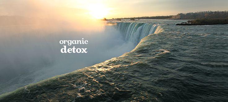Organic Detox by DavidsTea