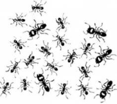 les fourmis quoi faire contre les fourmis la maison. Black Bedroom Furniture Sets. Home Design Ideas