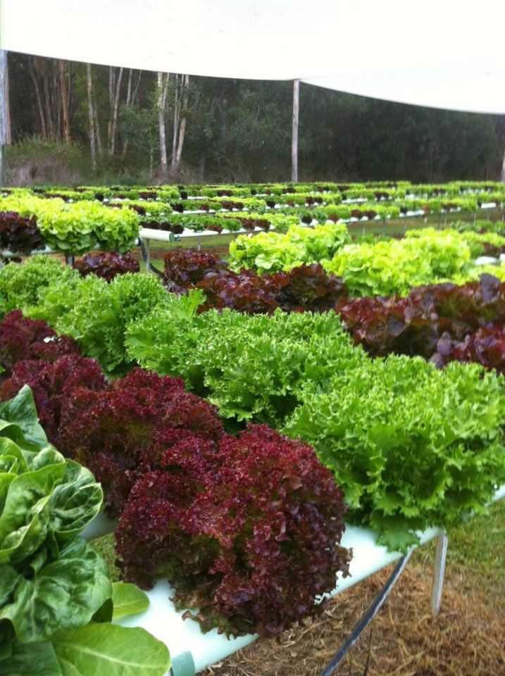 177 best hydroponic gardening images on pinterest for Hydro gardens