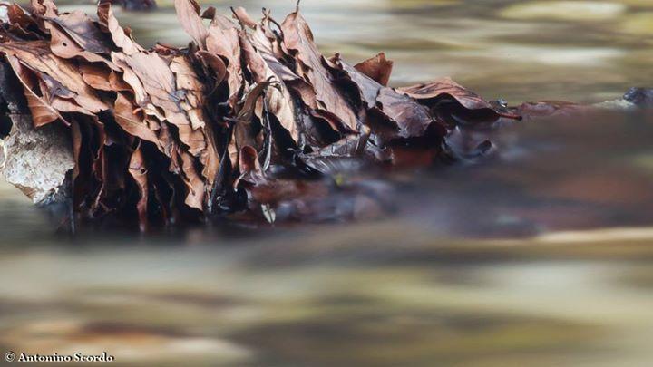 #scorre #lenta e #inarrestabile la #forza della #vita...  #highexposure #nature #photography #abruzzo http://ift.tt/2bhah5M http://ift.tt/2aUr3JO http://ift.tt/2aSDkLq #nature #photography #wildlifephotography