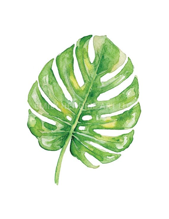 split leaf philodendron watercolor print tropical leaf print monstera deliciosa split. Black Bedroom Furniture Sets. Home Design Ideas