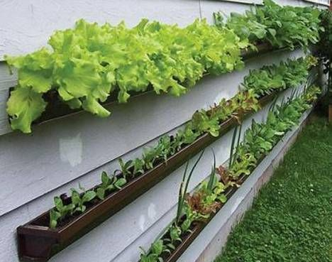 Lettuce is great in containers, like these made from gutters. via Tree Hugger