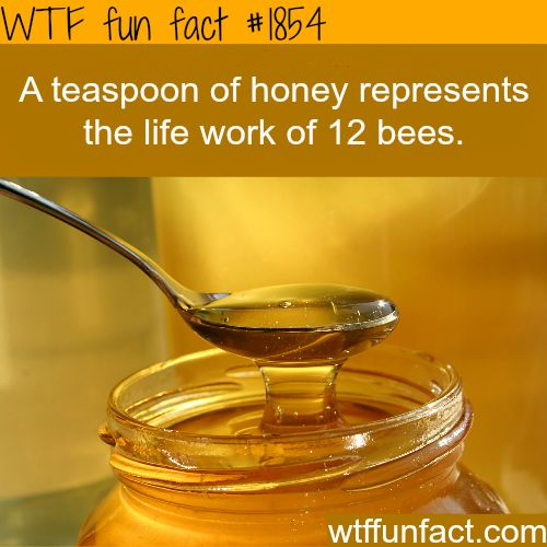 """A teaspoon of honey - life's work of 8 """"Busy Bees"""" or 12 Not-So-busy Bees!?!  -WTF? facts (#2479 & #1854)"""
