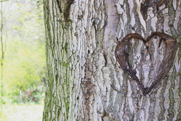 Bäume statt Rosen zu Valentinstag! Mit unseren Freunden von @treedom_trees kannst du ein von Natur aus untrennbares Symbol eurer Liebe in Kamerun pflanzen lassen: einen Kakao-und einen Bananenbaum! Die Blätter des Bananenbaums schützen die lichtscheue Kakaopflanze das lokale Ökosystem wird gestärkt und Menschen vor Ort bekommen eine sichere Einnahmequelle. Das nennen wir mal ein romantisches und sinnvolles Geschenk.  Nicht nur an Valentinstag. Verschenkt ihr überhaupt etwas zu Valentinstag?…