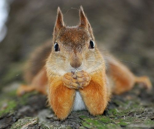 17 Best Images About Squirrel On Pinterest Summer Days