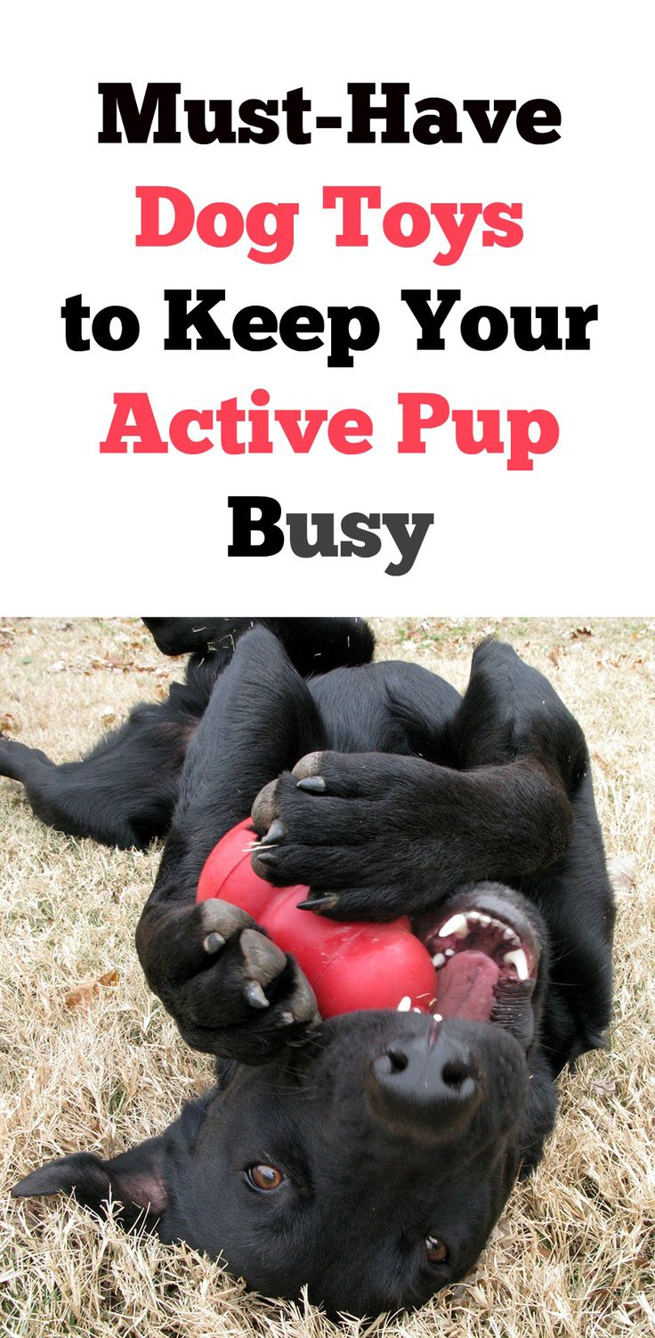 5 MustHave Dog Toys to Keep Your Active Dog Busy Dog
