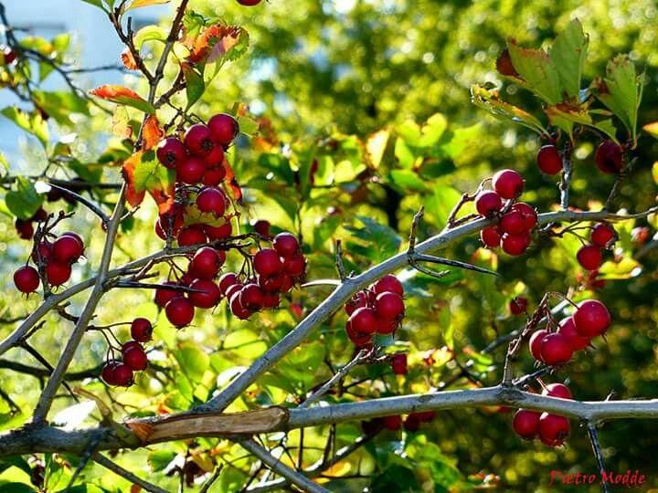 Frutti rossi autunnali di Pietro Modde