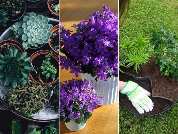 Hatalmas sikerélmény, amikor a szobanövényt magad szaporíthatod és ajándékozhatod tovább.