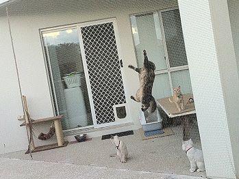 12 Best Images About Patio Cat Enclosures On Pinterest