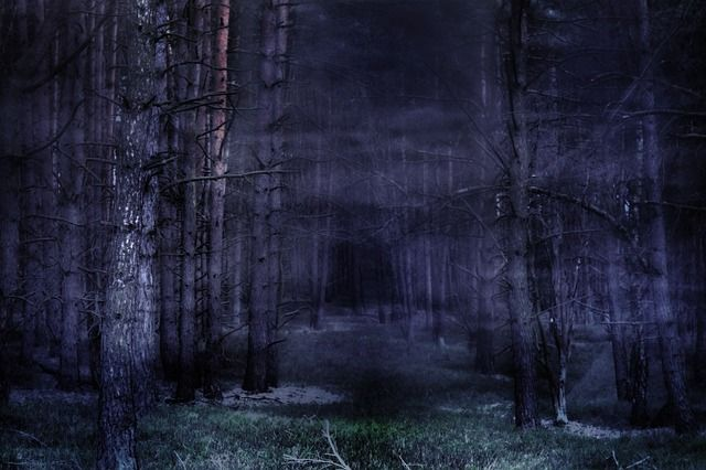 Bos, Mist, Mystiek, Sprookjes, Sfeer, Gespenstig