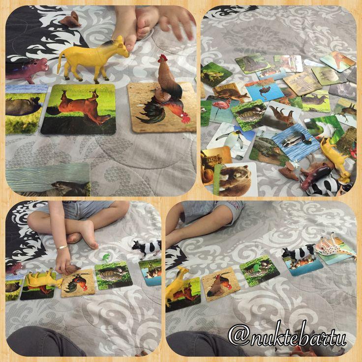 Hayvan kartları