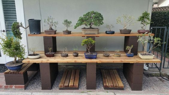 Picture #5 - I now have 17 pre-bonsai. My bonsai display bench sure comes in handy. I like all the shelves. 4/3/16