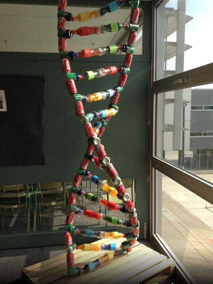 DNA model project | DNA-RNA | Pinterest | Dna model, DNA ...