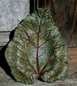 Homemade Concrete Birdbath using a rhubarb leaf!