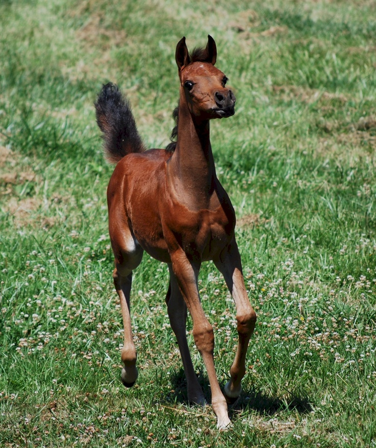 how to tell if a horse is in foal