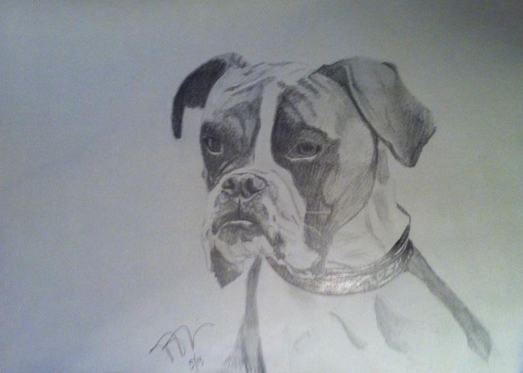 Ziggy, pencil on paper.