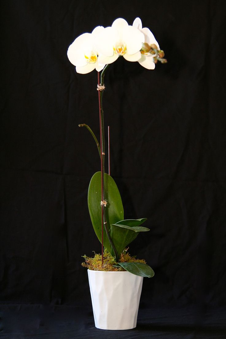 Orchid in cemic