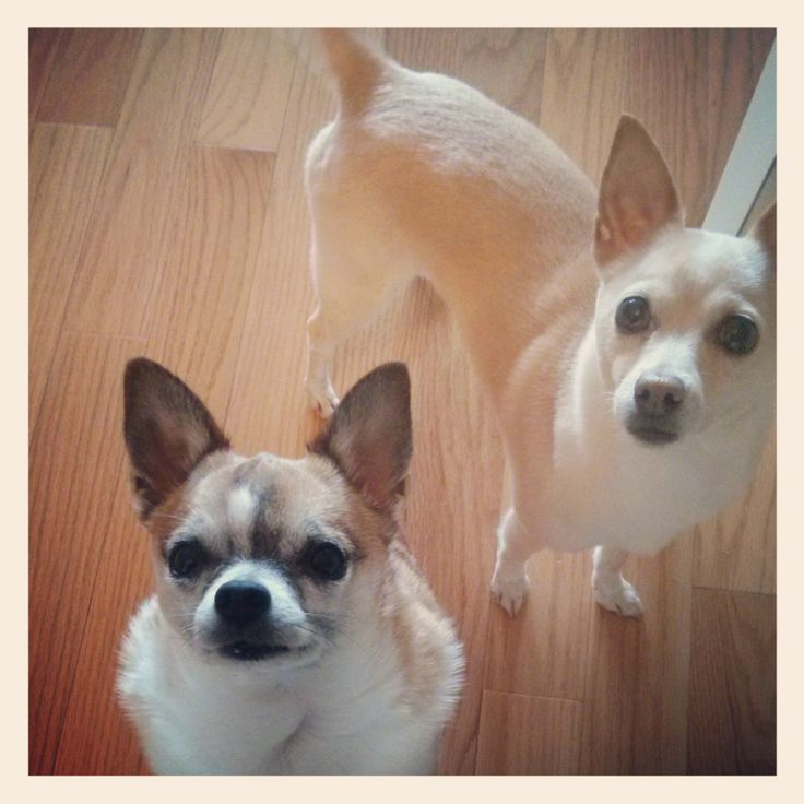 we heard that you have bacon