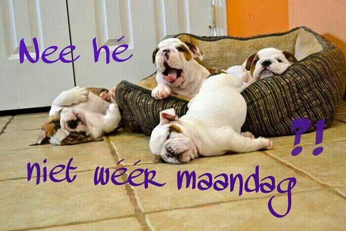 Niet weer Maandag!!