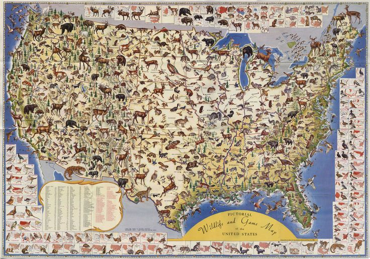 Pictorial Map Of Wildlife And Game In The US By Ira Moss - Map the us game