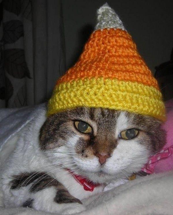 lifespan of indoor cat