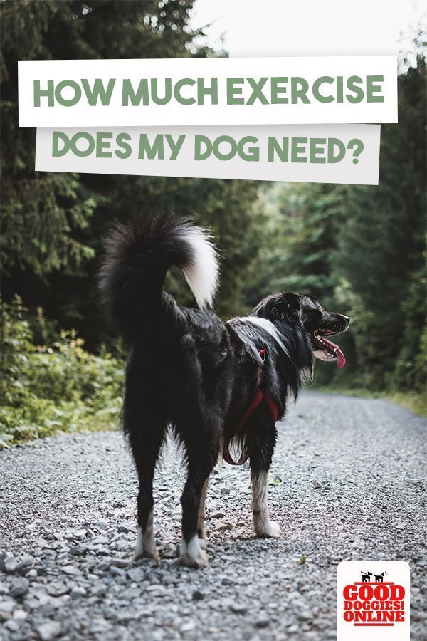 How Much Exercise Does My Dog Need Dogs Dog Breeds Dog Insurance