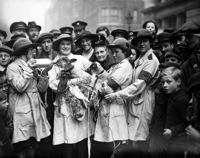 Girls from the Women's Land Army feeding lambs during a pause on their march