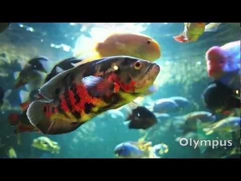 Olympus OM-D E-M5 HD Video Quality and vs Fuji X-Pro 1