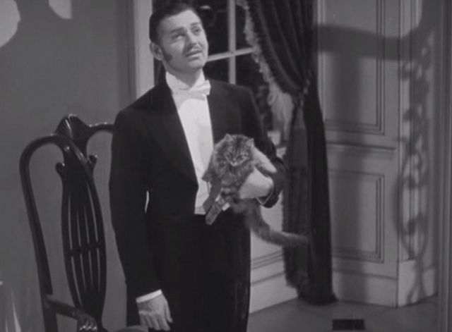 A long-haired tabby cat named Erasmus makes friends with Irish politician Charles Stewart Parnell (Clark Gable) in the film Parnell (1937).