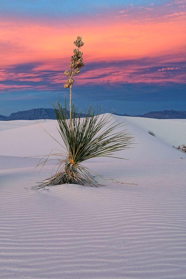 Desert Beautyby Rick Goldwasser