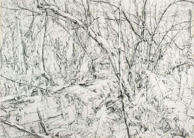 Mary ztonkin Mary Tonkin, Cradle, Kalorama 2007 charcoal on paper 197 x 278 cm