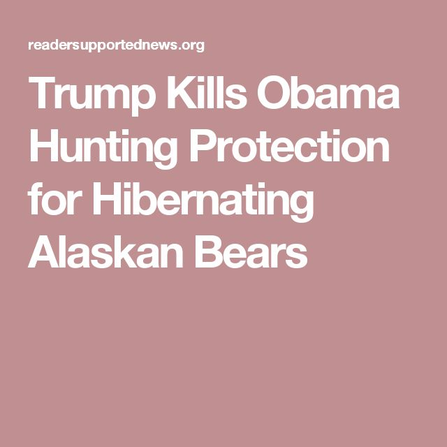 But animal rights activists say this will open the door to hunters snatching hibernating bears and wolves out of their dens, or even killing them in front of their cubs. The president also rolled back the Federal Communication Commission's (FCC) Internet privacy rules and the Labor Department's workplace protections that required companies to report injuries and illnesses that occur on the job.