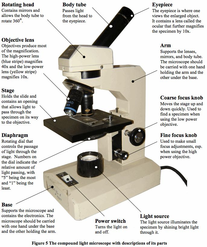 Parts of a Microscope and Their Functions   Mr. Klein's ...