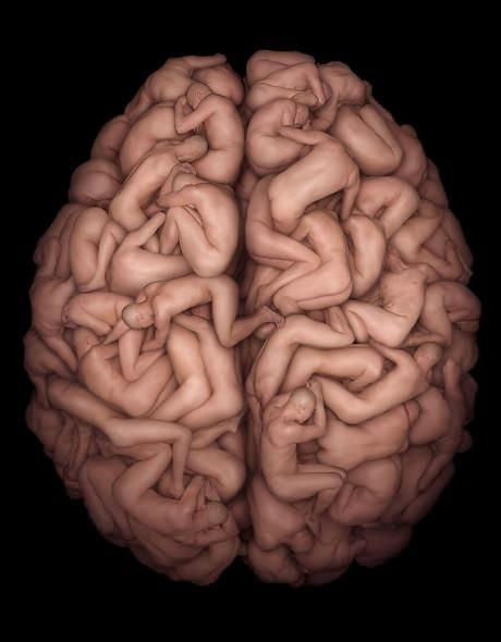 the 25+ best ideas about human brain anatomy on pinterest, Muscles