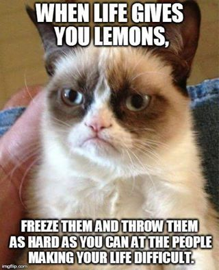 Grumpy Cat Memes's photo. More