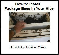 I build a bee hive for my package bees. Building a bee hive from a kit is really easy. If I can do it anyone can!