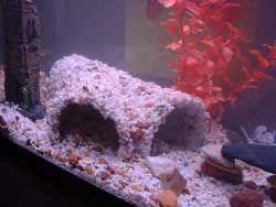 DIY Aquarium Cave   10 step instructions for building an attractive aquarium cave using a PVC pipe, aquarium gravel, and silicone.