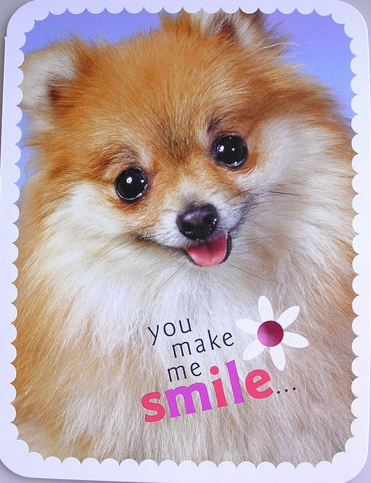 Tan & White Pomeranian Puppy Dog Encouragement You Make Me Smile Greeting Card