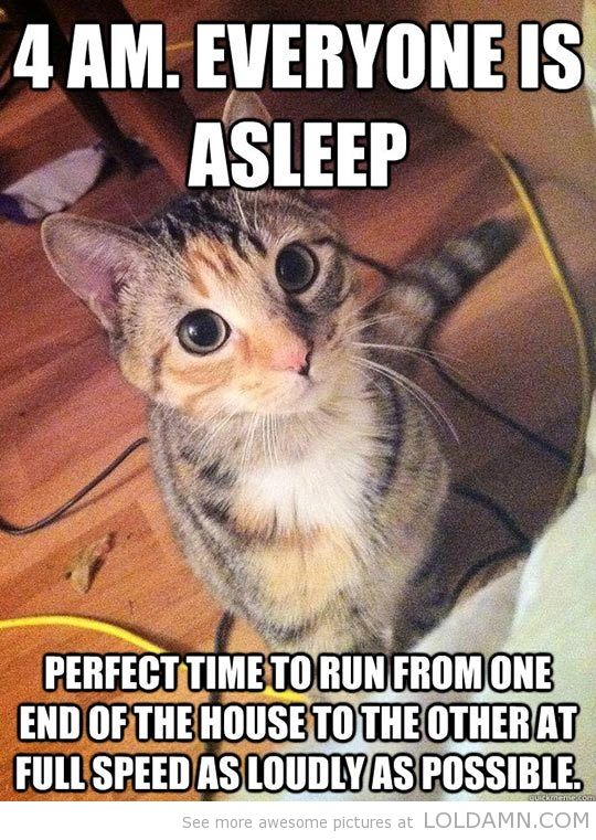 This is EXACTLY what my cats did on our camping trip at 4:20 AM, and the trailer is really small, so they had to jump on the couch and wake me up in order to accomplish their breakneck speed racing. x|