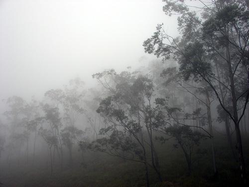 Morning mist, Rivestern, Matale, Sri Lanka (www.secretlanka.com)