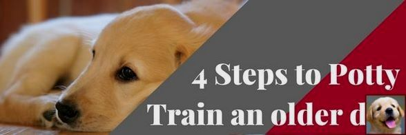 How To Train Dog Last Day On Earth Tip 113836304 Training Your Dog Dog Behavior Problems Dog Last Day