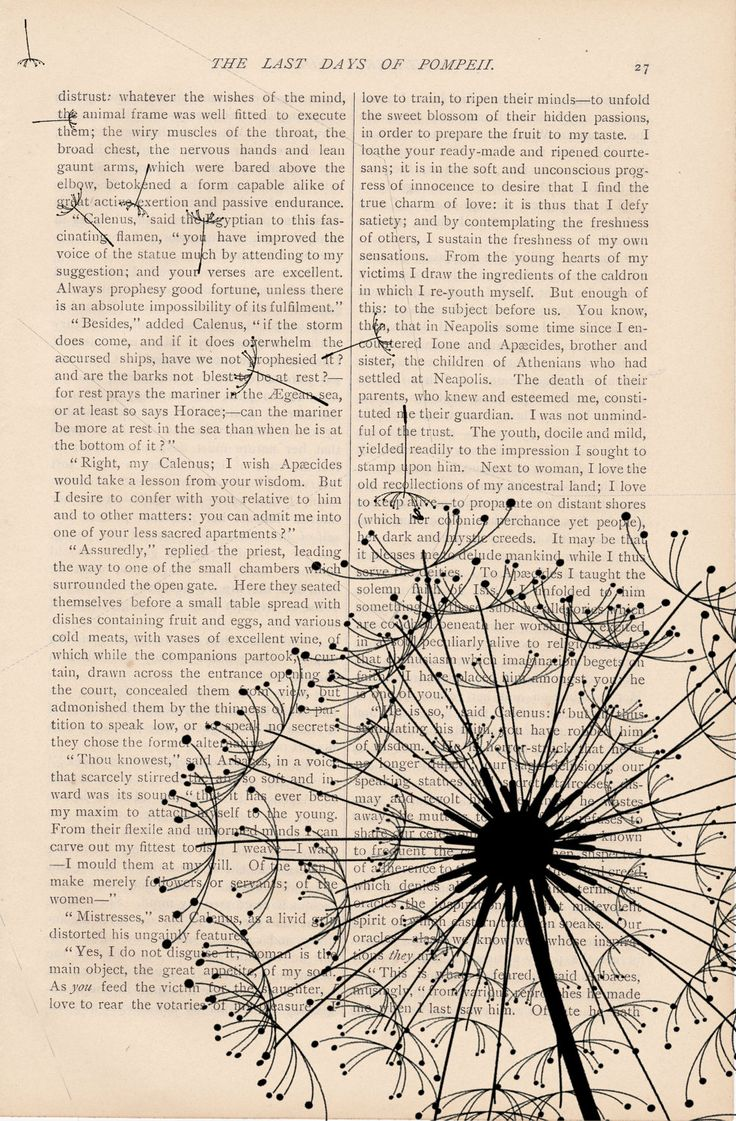 dandelion sobre hoja de libro