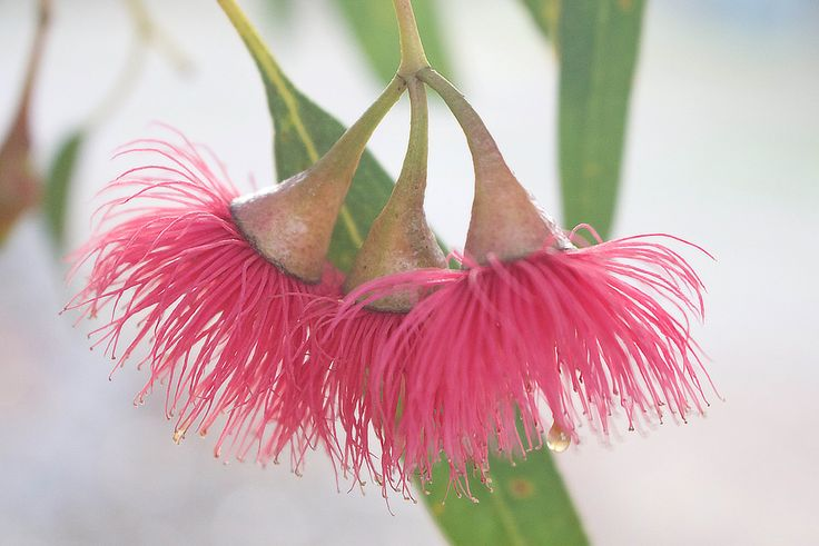 A personal favourite from my Etsy shop https://www.etsy.com/au/listing/401068895/red-pink-flower-tree-photo-print-nature