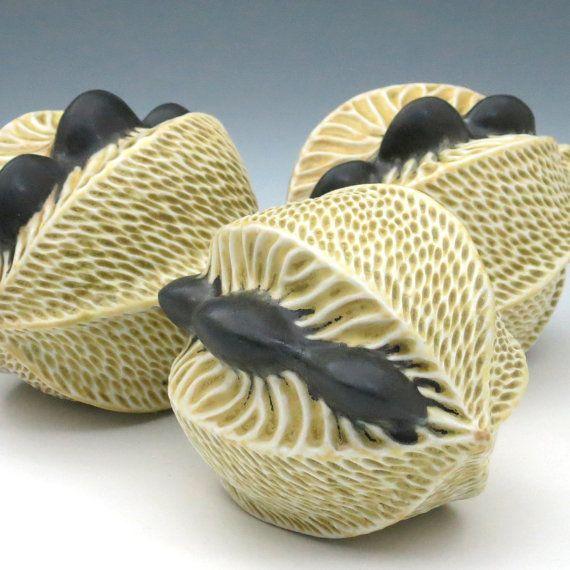 M s de 1000 ideas sobre vainas de semillas en pinterest - Semilla de magnolia ...