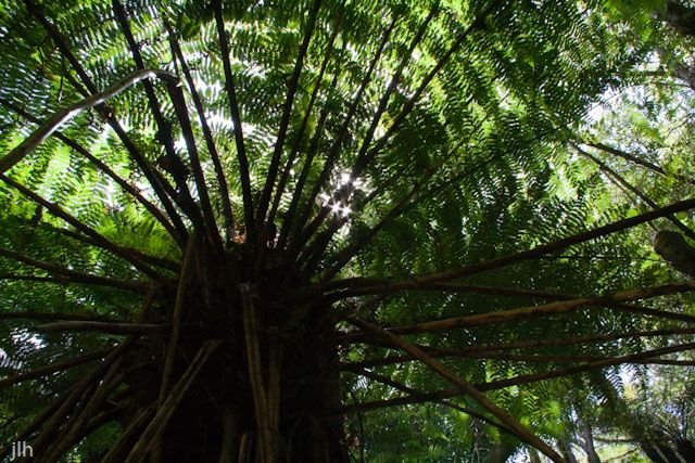 This shot of a fern was taken last year at Kaitoke regional park Wellington, #NewZealand. Most photos of ferns seem to be taken from side on or looking down on them. This shot is a little different, it is taken from underneath the fern and looking up.