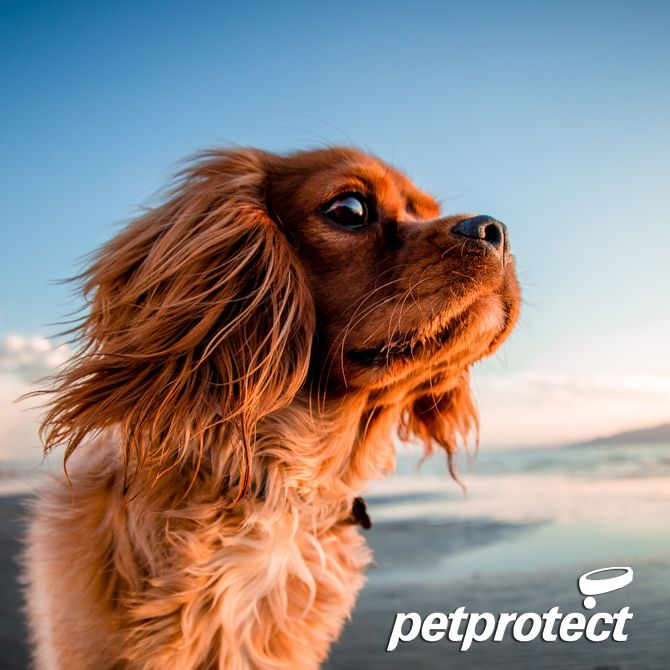 Pet Protect are specialist in Pet Insurance with 35 years' experience, offering flexible & affordable cover, for dogs and cats. Get a quote today from Pet Protect