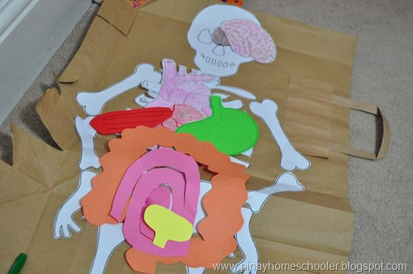 The Skeletal System from The Pinay Homeschooler