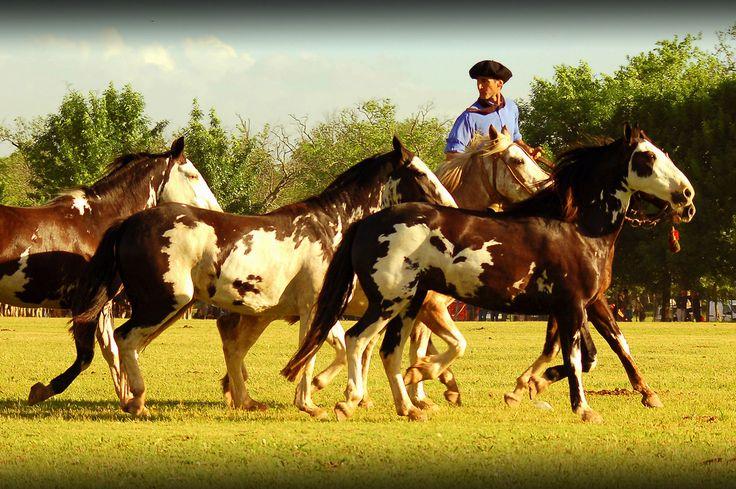 """""""...El General Lucio V. Mansilla cuenta que Don Juan Manuel de Rosas, en 1840, mandó de regalo dos tropillas de overos negros con una yegua obscura a su ahijado Mariano Rosas, más tarde cacique de los ranqueles. El Cacique Bustos, de varonil aspecto, se presentó en 1870 a parlamentar con el General Mansilla, montado en un magnífico caballo overo negro, perfectamente ensillado, con ricos estribos de plata y chapeados...""""  Trecho de """"Vocabulario y Refranero Criollo"""", de Tito Saubidet San…"""